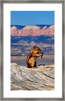Bryce Lunch Up Close Framed Print