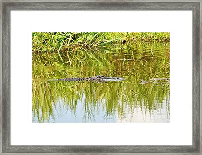 Bubble Blower Framed Print by Al Powell Photography USA