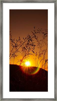 Bubble Ray Framed Print by Svetlana Sewell