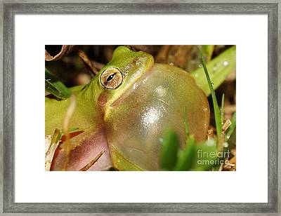 Bubbleicious 2 Framed Print by Lynda Dawson-Youngclaus