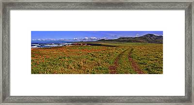 Buchon Trail Framed Print