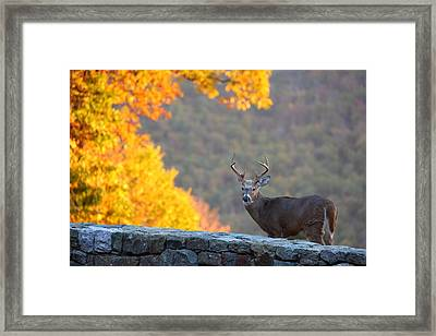 Buck In The Fall 08 Framed Print by Metro DC Photography