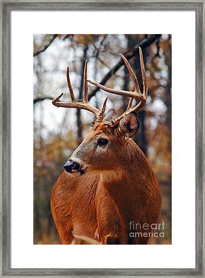 Buck Owens Framed Print by Gib Martinez
