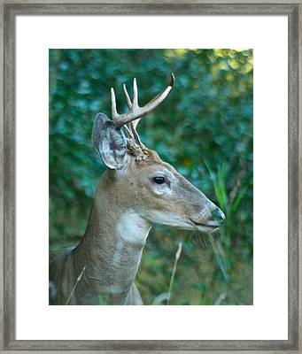 Buck Profile 9634 Framed Print by Michael Peychich