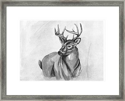 Buck Framed Print by Sarah Farren