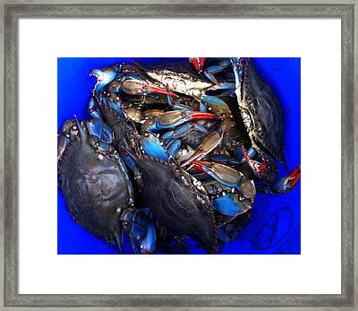 Bucket Of Blue Crabs Framed Print by Laura Tarnoff