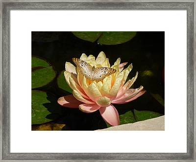 Buckeye And Lilly Framed Print