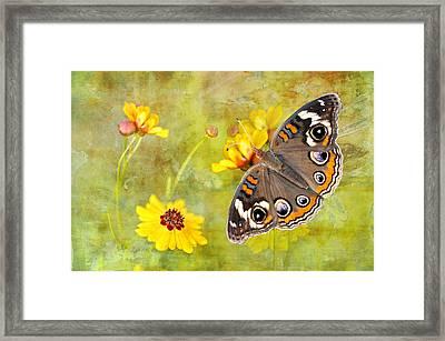 Buckeye Butterfly In The Meadow Framed Print by Bonnie Barry
