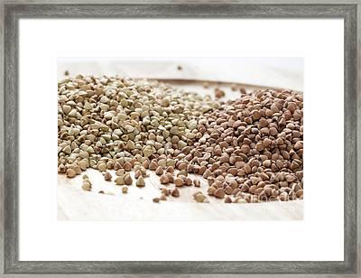 Buckwheat Kasha Framed Print by Charlotte Lake