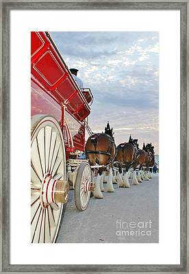 Bud Hitch Framed Print by Lynda Dawson-Youngclaus