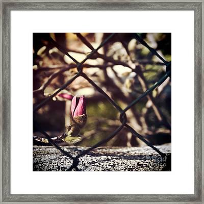 Bud Framed Print by Silvia Ganora