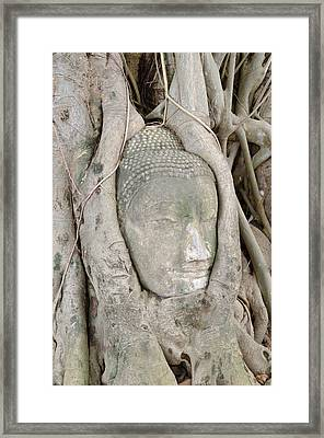 Buddha Head In A Tree Framed Print by Kanoksak Detboon