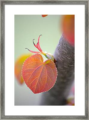 Budding Heart Framed Print