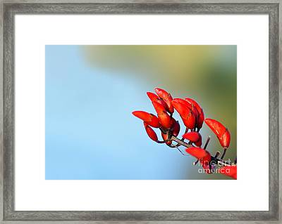 Buds In The Sky Framed Print by Kaye Menner