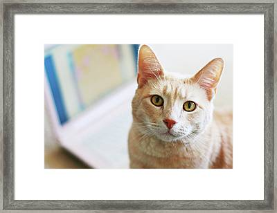 Buff Cat At Computer Framed Print by Image(s) by Sara Lynn Paige