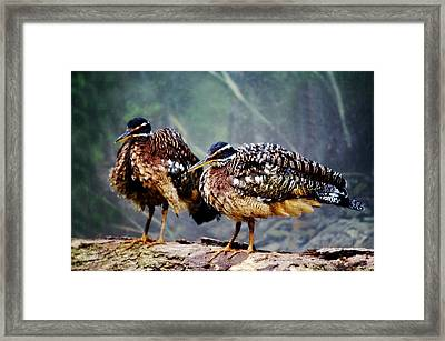 Buff Crested Bustard Framed Print by Paulette Thomas