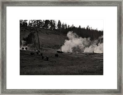 Buffalo Apocalypse  Framed Print