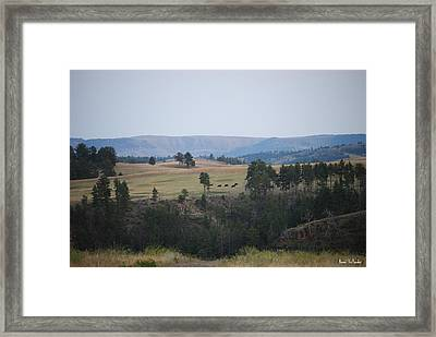 Buffalo Framed Print by Bonae VonHeeder