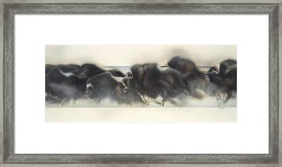 Buffalo In Winter Framed Print by Douglas Fincham