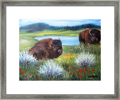Buffalo Repose  Framed Print by Patti Gordon