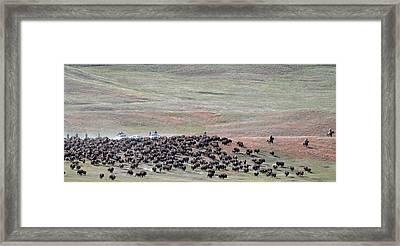 Buffalo Round-up Framed Print
