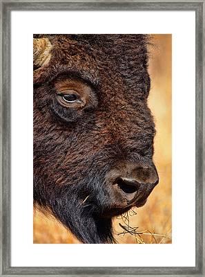 Buffalo Up Close Framed Print by Alan Hutchins