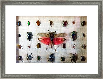 Bug Box Framed Print by Tim Nichols