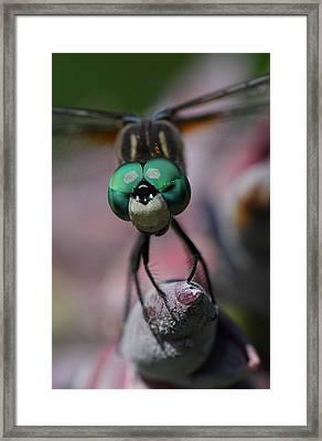 Bug Eater Framed Print by Charles Dana