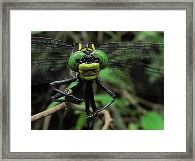 Framed Print featuring the photograph Bug-eyed by Doug McPherson