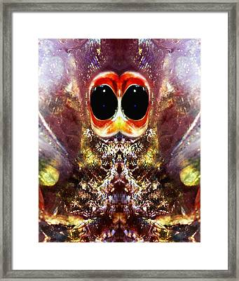 Bug Eyes Framed Print by Skip Nall