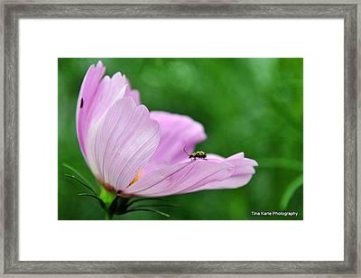Bug On Flower Tip Framed Print by Tina Karle