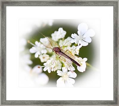Bug On White Framed Print by Maureen  McDonald