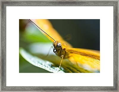 Bug Out Framed Print by Leslie Leda