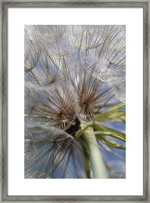 Bug's Eye View Framed Print
