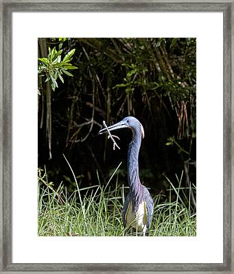 Building A Nest Framed Print by Phill Doherty