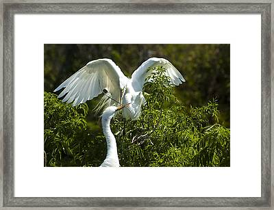 Building Our Home Framed Print by Carolyn Marshall