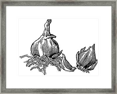 Bulbs Of Garlic, Woodcut Framed Print by Gary Hincks