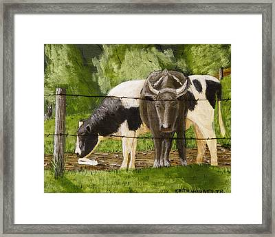 Bull And Cow Spring Farm Field Painting Framed Print