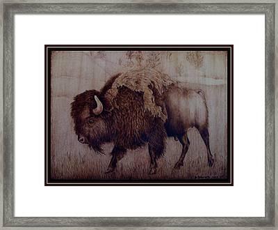 Bull Attitude Framed Print by Jo Schwartz