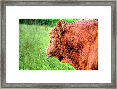 Bull Framed Print by Barry R Jones Jr