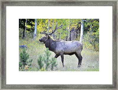 Framed Print featuring the photograph Bull Elk by Nava Thompson