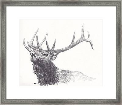 Bull Elk Framed Print by Nicole Grattan