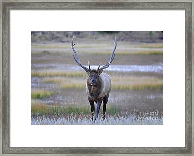 Framed Print featuring the photograph Bull Elk Warrior by Nava Thompson