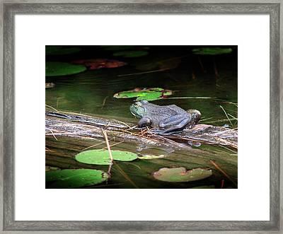Bull Frog Framed Print