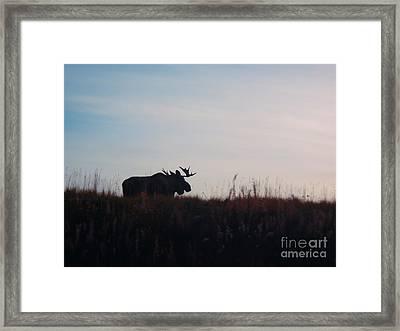 Bull Moose Silhouette Framed Print by Adam Owen