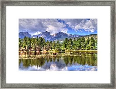 Bull Moose Wading Framed Print by Scott Mahon