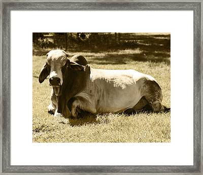 Framed Print featuring the photograph Bull by Steve Sperry