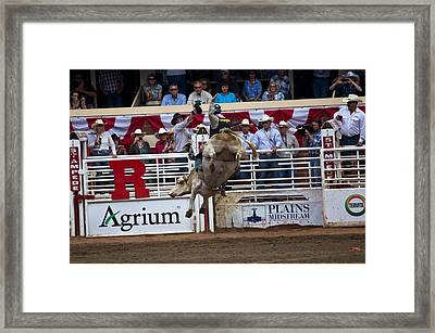 Bull With Some Big Air Framed Print by Darren Langlois