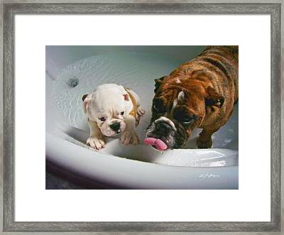 Framed Print featuring the photograph Bulldog Bath Time II by Jeanette C Landstrom