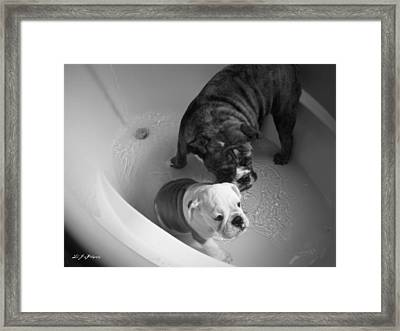 Framed Print featuring the photograph Bulldog Bath Time by Jeanette C Landstrom